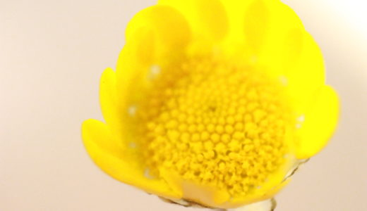 卵・乳アレルギーの息子が経験した幼稚園での誤食。「おかわり」に注意!